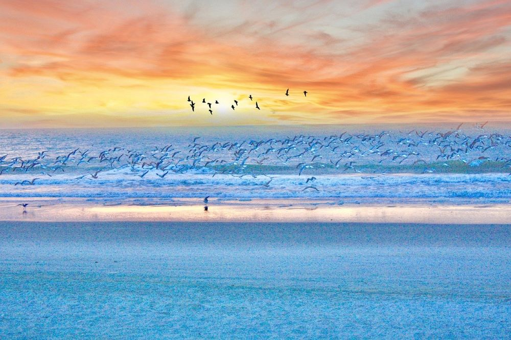 myrtle beach coast