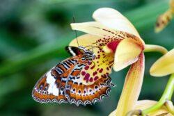butterfly in garden on yellow flower